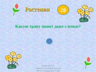 Растения Какую траву знают даже слепые? 20 Соловьёва С.А. учитель начальных