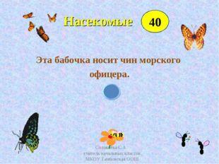 Насекомые Эта бабочка носит чин морского офицера. 40 Соловьёва С.А. учитель