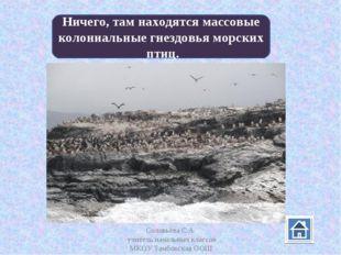 Соловьёва С.А. учитель начальных классов МКОУ Тамбовская ООШ Ничего, там нахо