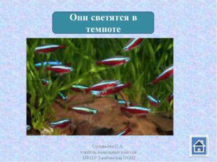 Соловьёва С.А. учитель начальных классов МКОУ Тамбовская ООШ Соловьёва С.А. у