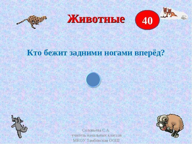 Животные Кто бежит задними ногами вперёд? 40 Соловьёва С.А. учитель начальных...