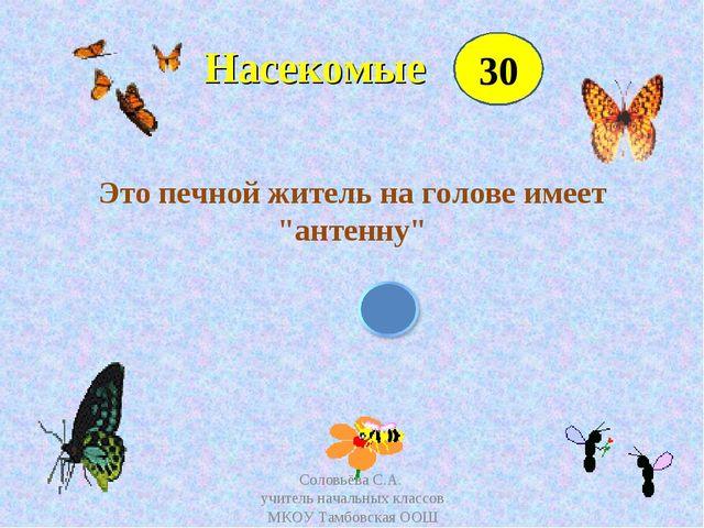"""Насекомые Это печной житель на голове имеет """"антенну"""" 30 Соловьёва С.А. учит..."""