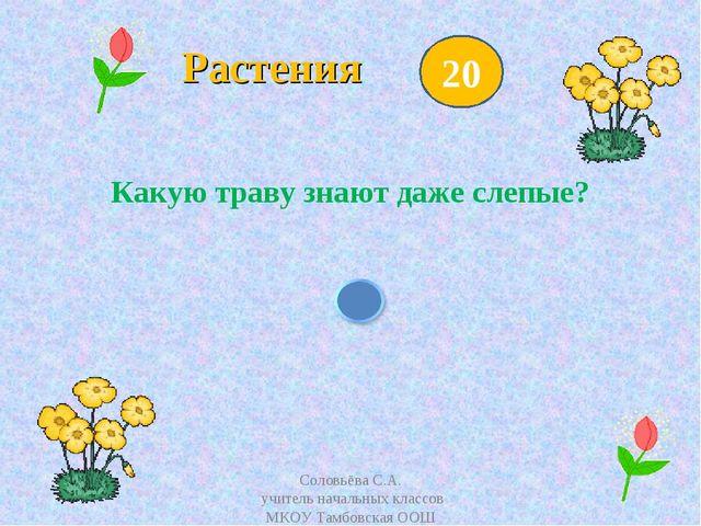 Растения Какую траву знают даже слепые? 20 Соловьёва С.А. учитель начальных...