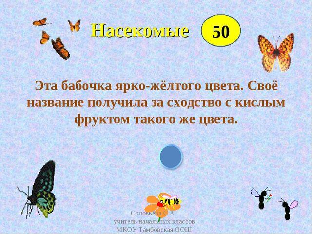 Насекомые Эта бабочка ярко-жёлтого цвета. Своё название получила за сходство...