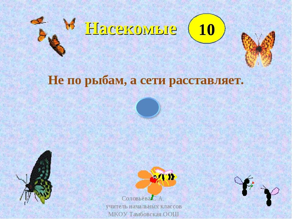 Насекомые Не по рыбам, а сети расставляет. 10 Соловьёва С.А. учитель начальн...
