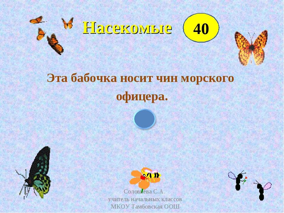 Насекомые Эта бабочка носит чин морского офицера. 40 Соловьёва С.А. учитель...