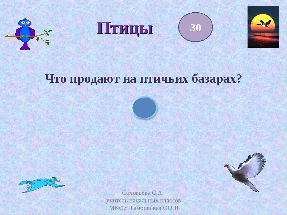 Птицы Что продают на птичьих базарах? 30 Соловьёва С.А. учитель начальных кл...