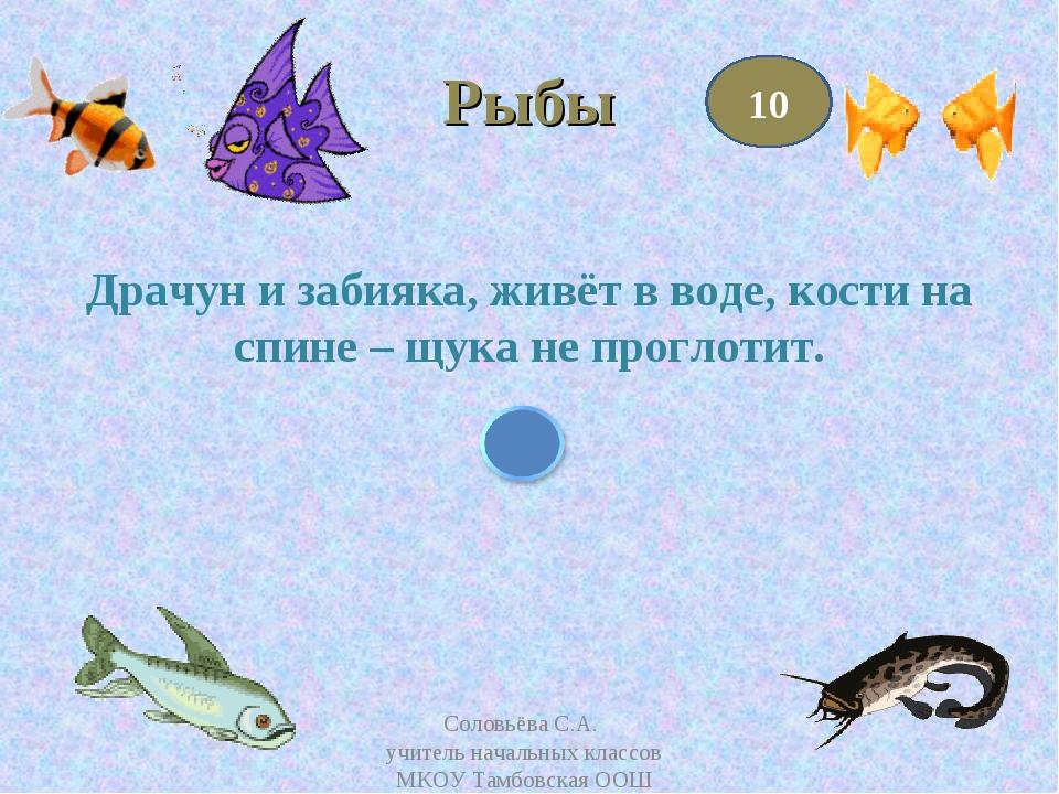 Рыбы Драчун и забияка, живёт в воде, кости на спине – щука не проглотит. 10 С...