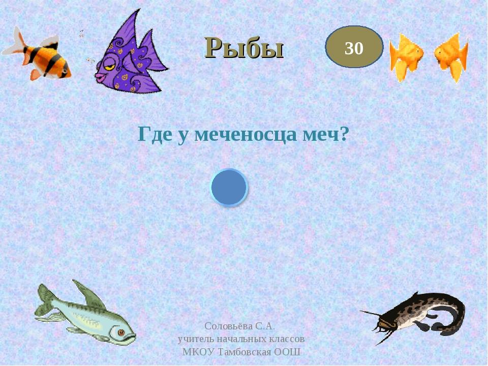 Рыбы Где у меченосца меч? 30 Соловьёва С.А. учитель начальных классов МКОУ Та...