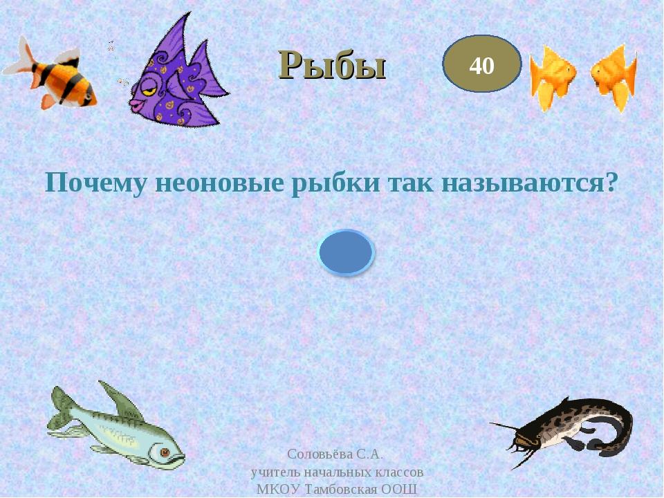 Рыбы Почему неоновые рыбки так называются? 40 Соловьёва С.А. учитель начальны...