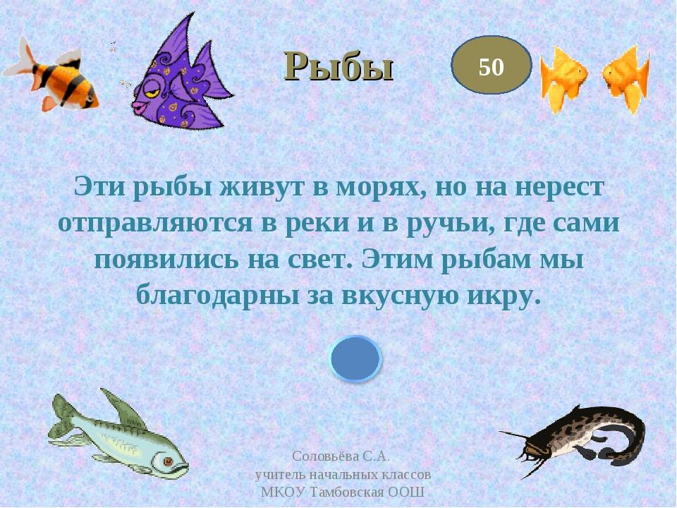 Рыбы Эти рыбы живут в морях, но на нерест отправляются в реки и в ручьи, где...