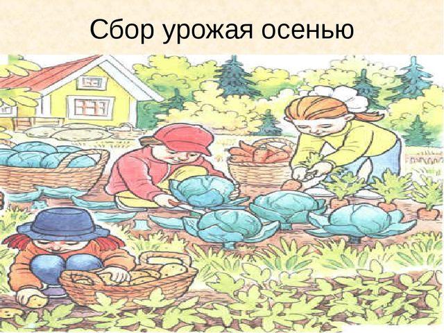 Сбор урожая осенью