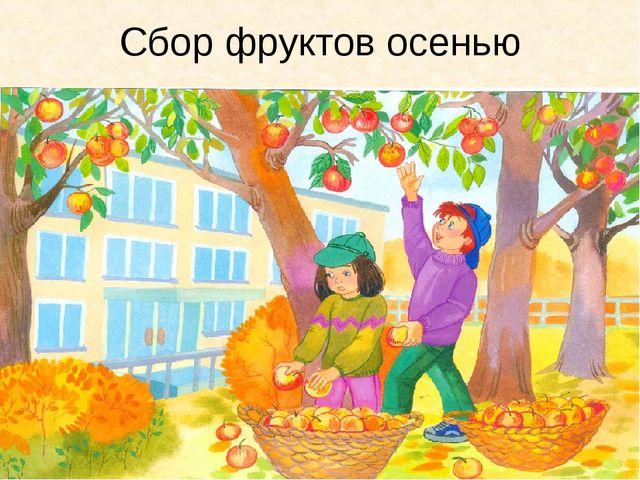 Сбор фруктов осенью