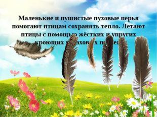 Маленькие и пушистые пуховые перья помогают птицам сохранять тепло. Летают п
