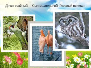 Дятел зелёный Сыч мохноногий Розовый пеликан