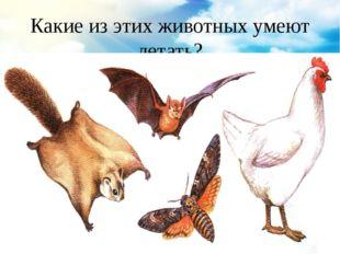 Какие из этих животных умеют летать?