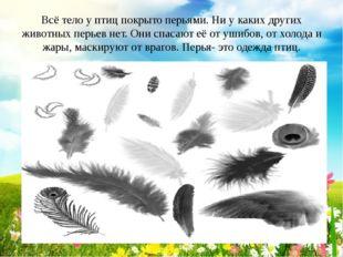 Всё тело у птиц покрыто перьями. Ни у каких других животных перьев нет. Они с