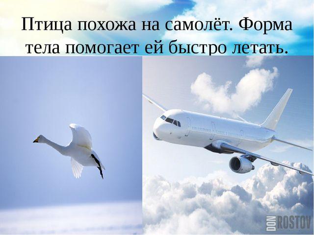 Птица похожа на самолёт. Форма тела помогает ей быстро летать.
