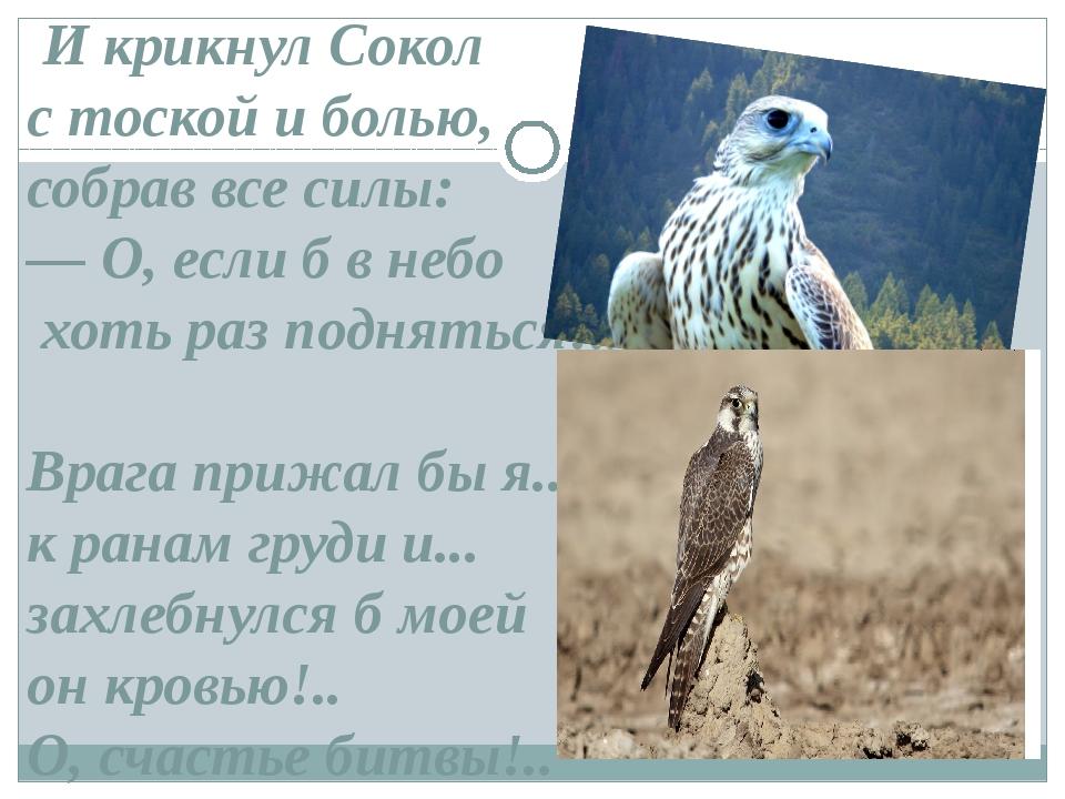 И крикнул Сокол с тоской и болью, собрав все силы: — О, если б в небо хоть р...