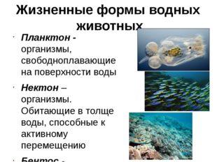 Жизненные формы водных животных Планктон - организмы, свободноплавающие на по