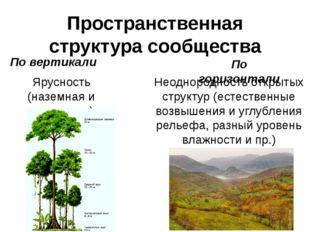 Пространственная структура сообщества По вертикали По горизонтали Ярусность (