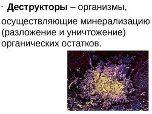 Деструкторы – организмы, осуществляющие минерализацию (разложение и уничтожен