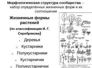 Морфологическая структура сообщества – набор определённых жизненных форм и их