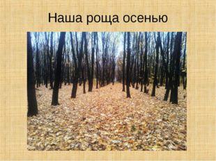 Наша роща осенью