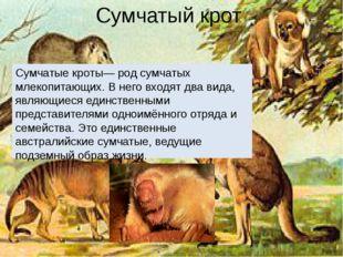 Сумчатый крот Сумчатые кроты— род сумчатых млекопитающих. В него входят два в