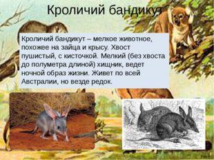 Кроличий бандикут Кроличий бандикут – мелкое животное, похожее на зайца и кры