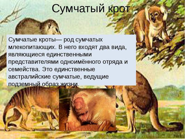 Сумчатый крот Сумчатые кроты— род сумчатых млекопитающих. В него входят два в...