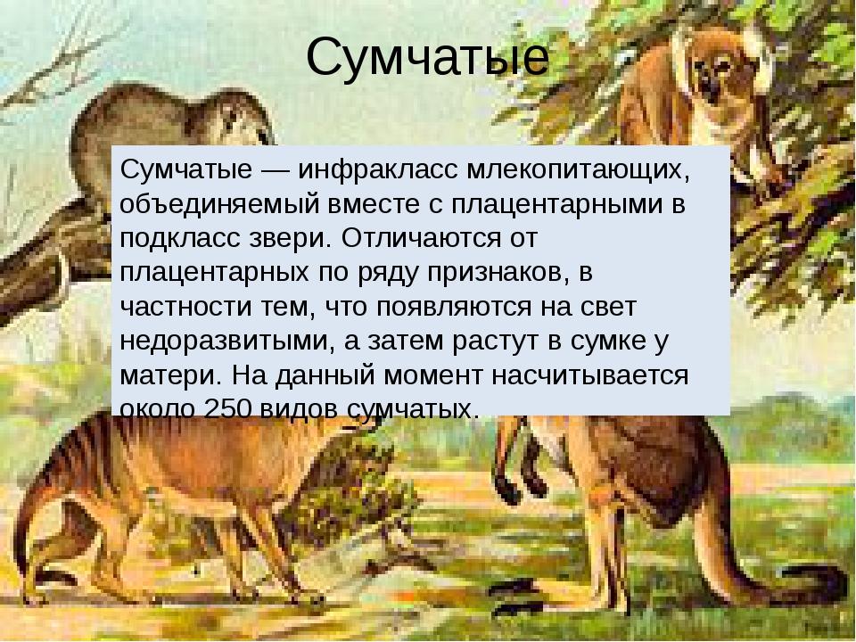 Сумчатые Сумчатые — инфракласс млекопитающих, объединяемый вместе с плацентар...