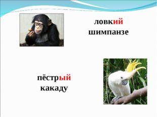 ловкий шимпанзе пёстрый какаду