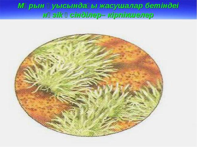 Мұрын қуысындағы жасушалар бетіндеі нәзіk өсінділер– кірпікшелер