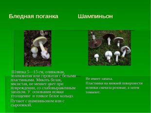 Бледная поганка Шампиньон Шляпка 5—15 см, оливковая, зеленоватая или серовата