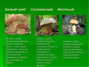 Белый гриб Сатанинский Желчный Шляпка у гриба гладкая, разнообразных тонов -