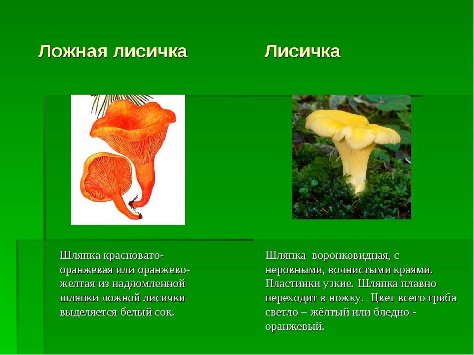 Ложная лисичка Лисичка Шляпка красновато-оранжевая или оранжево-желтая из на...