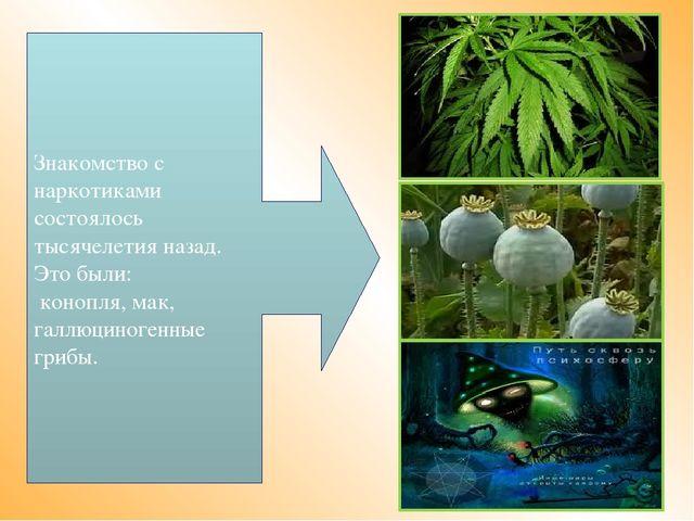 Знакомство с наркотиками состоялось тысячелетия назад. Это были: конопля, мак...