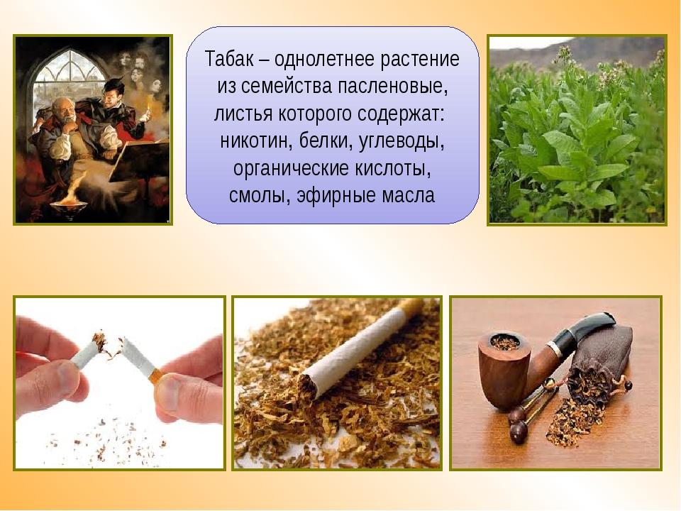Табак – однолетнее растение из семейства пасленовые, листья которого содержат...