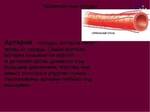 Кровеносные сосуды Артерия – сосуды, которые несут кровь от сердца. Самая кру