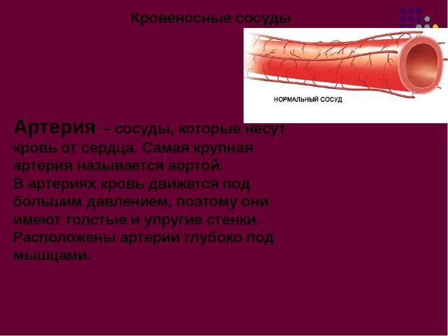Кровеносные сосуды Артерия – сосуды, которые несут кровь от сердца. Самая кру...