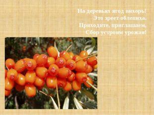 На деревьях ягод вихорь! Это зреет облепиха. Приходите, приглашаем, Сбор уст