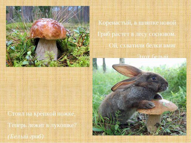 Коренастый, в шляпке новой Гриб растет в лесу сосновом. Ой, схватили белки в...
