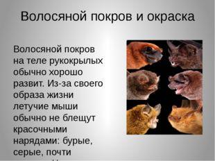 Волосяной покров и окраска Волосяной покров на теле рукокрылых обычно хорошо