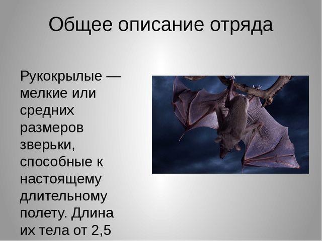 Общее описание отряда Рукокрылые — мелкие или средних размеров зверьки, спосо...