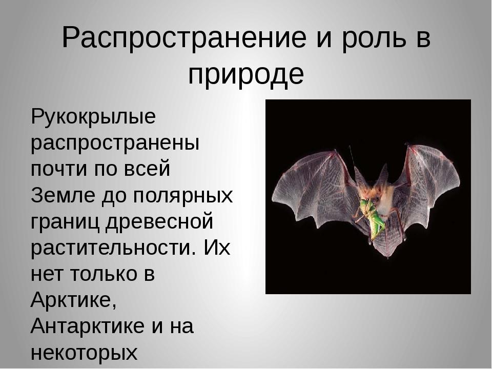 Распространение и роль в природе Рукокрылые распространены почти по всей Земл...