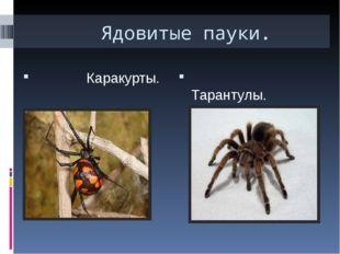 Ядовитые пауки. Каракурты. Тарантулы. Каракурт-черная вдова.В жаркие годы ка