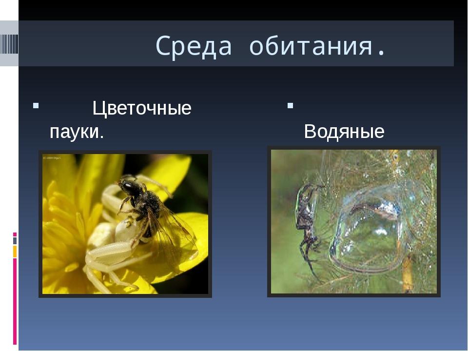 Среда обитания. Цветочные пауки. Водяные пауки(серебрянка). Свою добычу цвет...