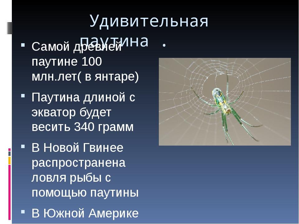 Удивительная паутина . Самой древней паутине 100 млн.лет( в янтаре) Паутина...