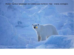 Живут белые медведи на Северном полюсе, там очень холодно.